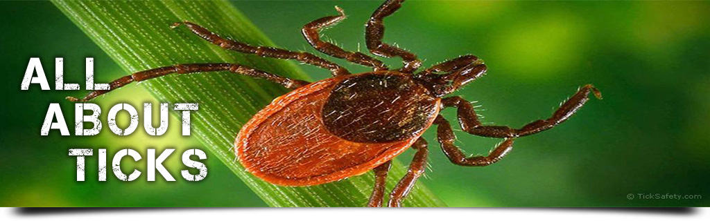 All About Ticks - Habitat, Behavior, Anatomy