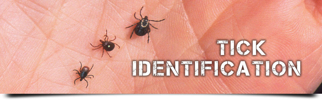 Tick Identification - Deer Ticks, Lone Star, Dog, Wood, Blacklegged