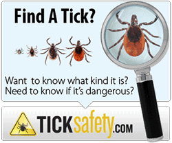 Be a Tick Detective